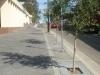 tree-grates-drains004
